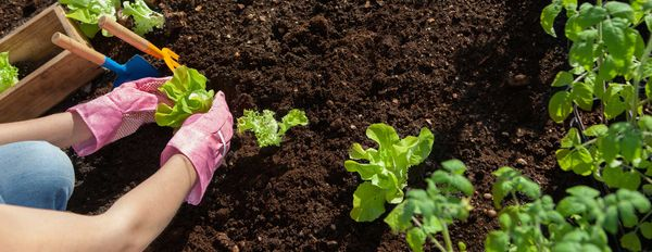 Nutrition Gardening® – Reclaiming Responsibility for Your Own Health – Part 1